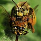 Bee Mating or Attack by Dennis Stewart