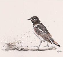 Male Hooded Robin by urbanmonk