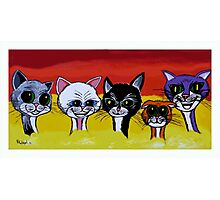 THE SPICE CATS Photographic Print