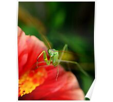 paying mantis on red flower Poster