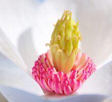 Magnolia (iPhone & iPod case) by Janice Chiu
