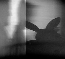 Rabbit shadow by David  Walker