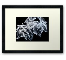 Water Iris Framed Print