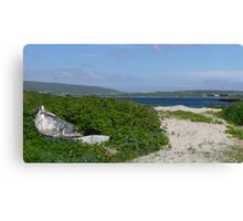 The path to Levenwick beach Canvas Print
