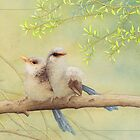 Juvenile variegated fairy-wrens card by Laura Grogan