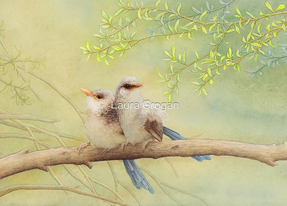 Juvenile variegated fairy-wrens by Laura Grogan