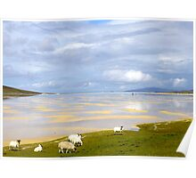 Are Ewe coming for a swim?  Poster