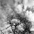 Veins of the sky by Jackson  McCarthy