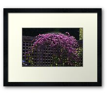 Red Tree and fence Framed Print