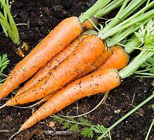 Carrots - fresh is best by Matthew Jones