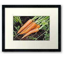 Carrots - fresh is best Framed Print