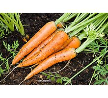 Carrots - fresh is best Photographic Print