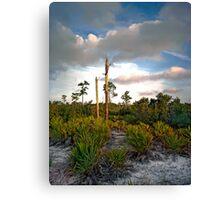 Scrub. Lake Lizzie Preserve.  Canvas Print