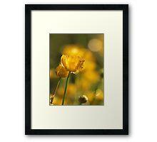 A little Sunshine Framed Print