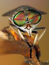 Horse fly by jimmy hoffman