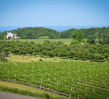 Michigan Wine Country by Sara Bawtinheimer