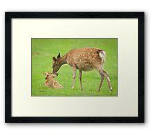 Oh Momma Framed Print