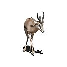 Antelope Baby by Vac1