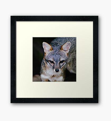 Zorro Grey Framed Print