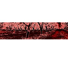 Red Grove Photographic Print