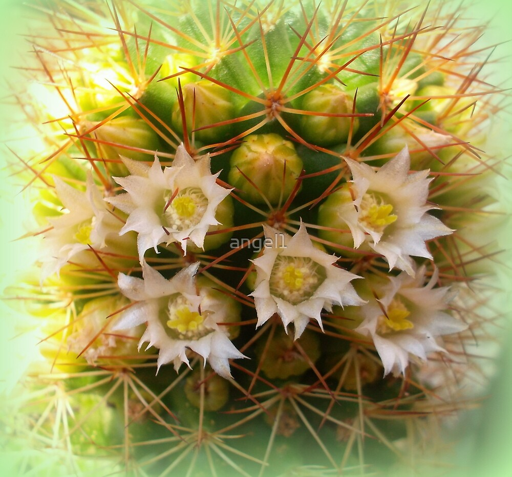 Cactus Closeup by ©The Creative  Minds