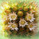 Cactus Closeup by ©The Creative  Minds