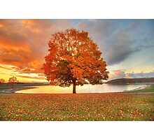 Fall Leaves at Sunset Photographic Print