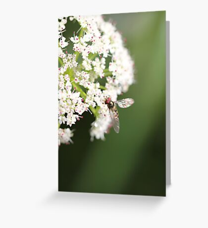 Elder flower  Greeting Card
