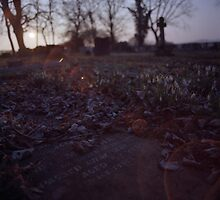 Snowdrops and stone by SkinkArt