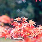 Autumn Leaves by Candypop