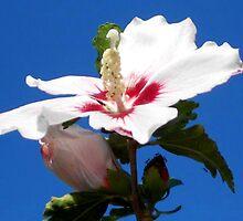 Red White & Blue NATURALLY by WildestArt