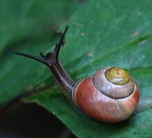Snail by Photos - Pauline Wherrell