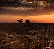 Harvest Time 5 by Jay Stockhaus