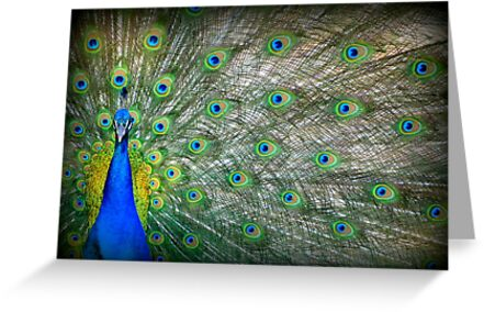 Peacock's Pride by Kimberly Chadwick