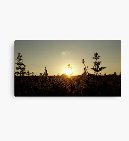 Golden Lining Canvas Print