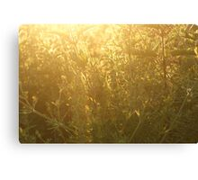 Fields in Gold Canvas Print