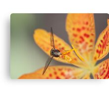 Orange flower and hoverfly Canvas Print