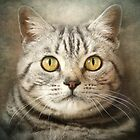 Tabby Cat by polly470