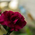 Floral  by George Langridge