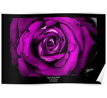 April Rose Pink Poster