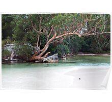 Tidal creek Poster
