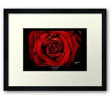 April Rose Red Framed Print