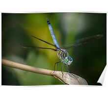 Blue Dragonfly! Poster