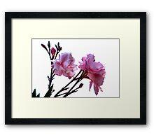 Pink 6649 Framed Print