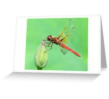 The Red Dragon Greeting Card