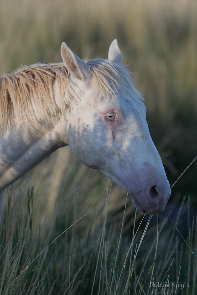 Beautiful Female Horse by Robbie Knight