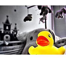 Color rubber toy duck Photographic Print