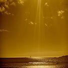 GOLDEN SUNLIGHT by Colleen2012
