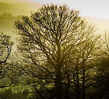 Tree silhouette, Glentress, Scottish Borders by Iain MacLean