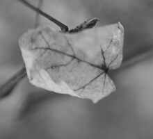 leaf In Black And White by Candy23